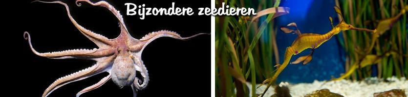 aquarium-zeedieren